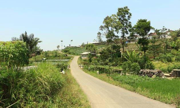 Kondisi jalan pedesaan menuju homestay kami