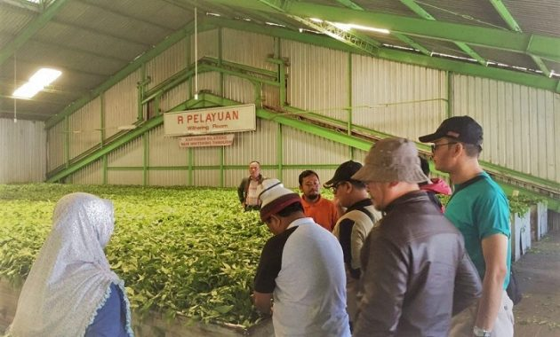 Factory tea