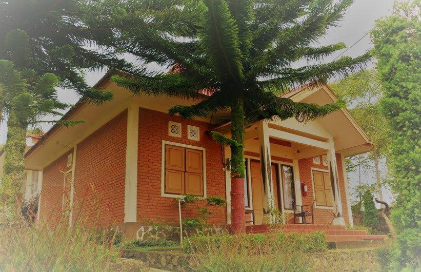 Villa dan Homestay di perkebunan Teh Tambi